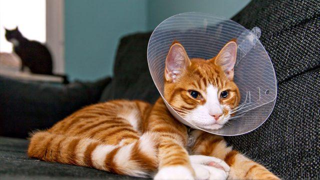 Best Cat Cone