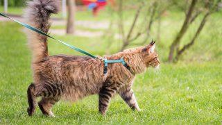 Best Cat Leash