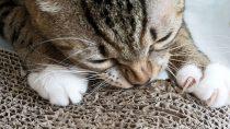 Best Cat Scratching Pad