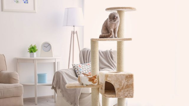 Best Cat Tree