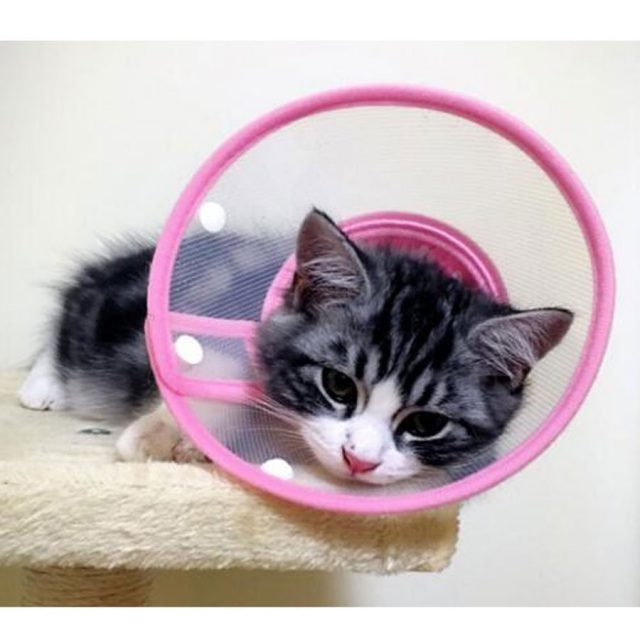 Bolbove Clear Soft Edge Recovery Cat Cone