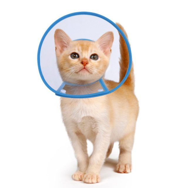 Petbaba Soft Padded E-Collar Recovery Cat Cone