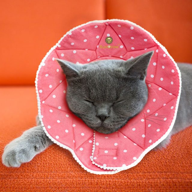 SunGrow Cute Stress-Free Comfy Durable Cat Cone